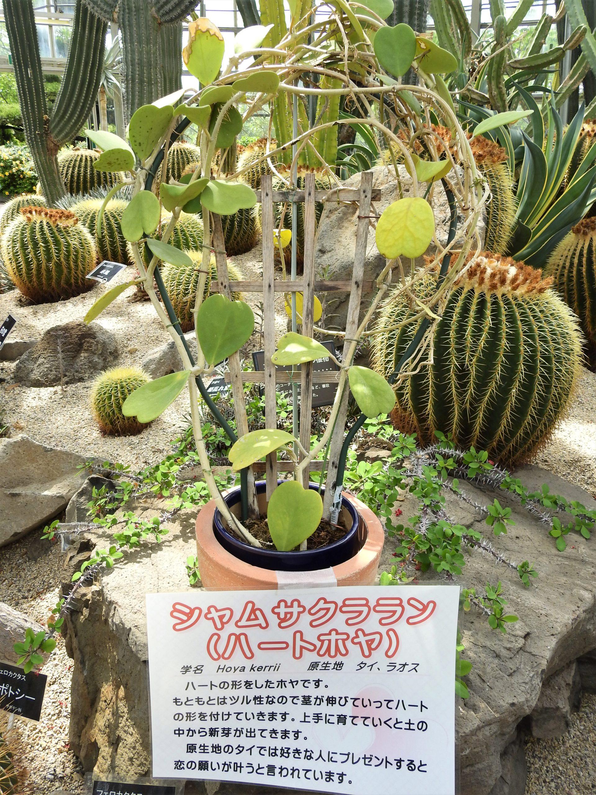 兵庫県 手柄山温室植物園