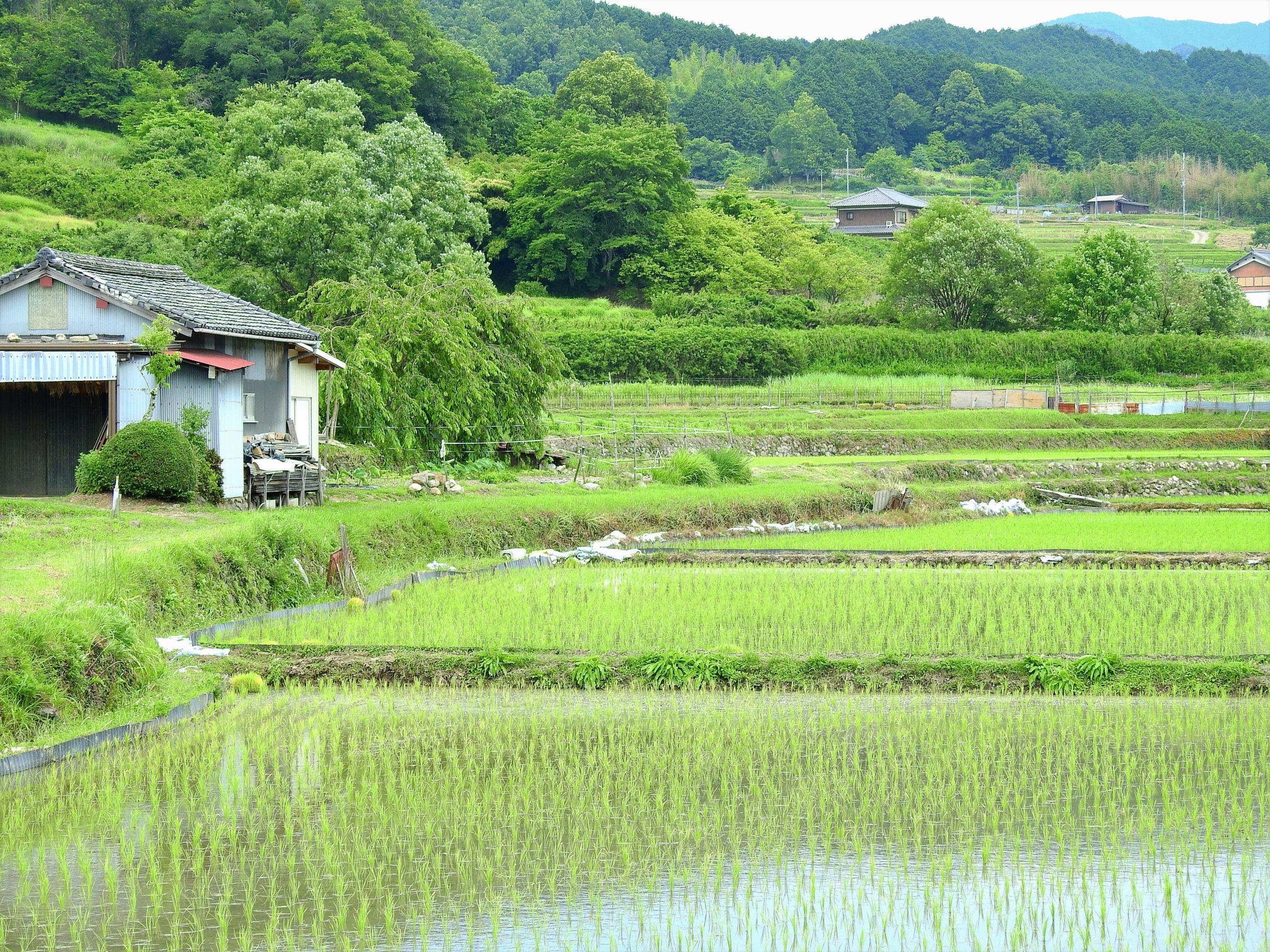 奈良県 桜井市