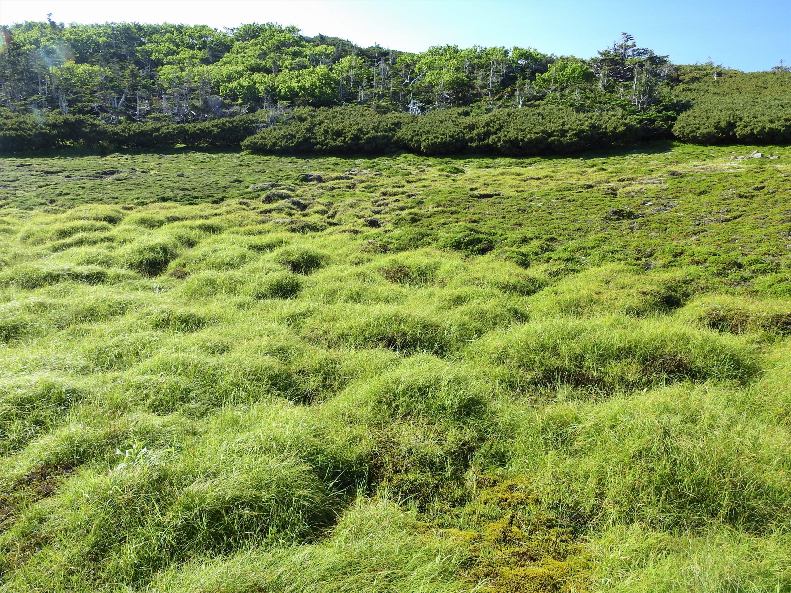 南アルプス 光岳 亀甲状土