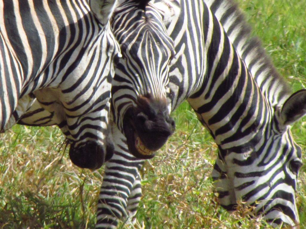タンザニア サファリ アルーシャ国立公園