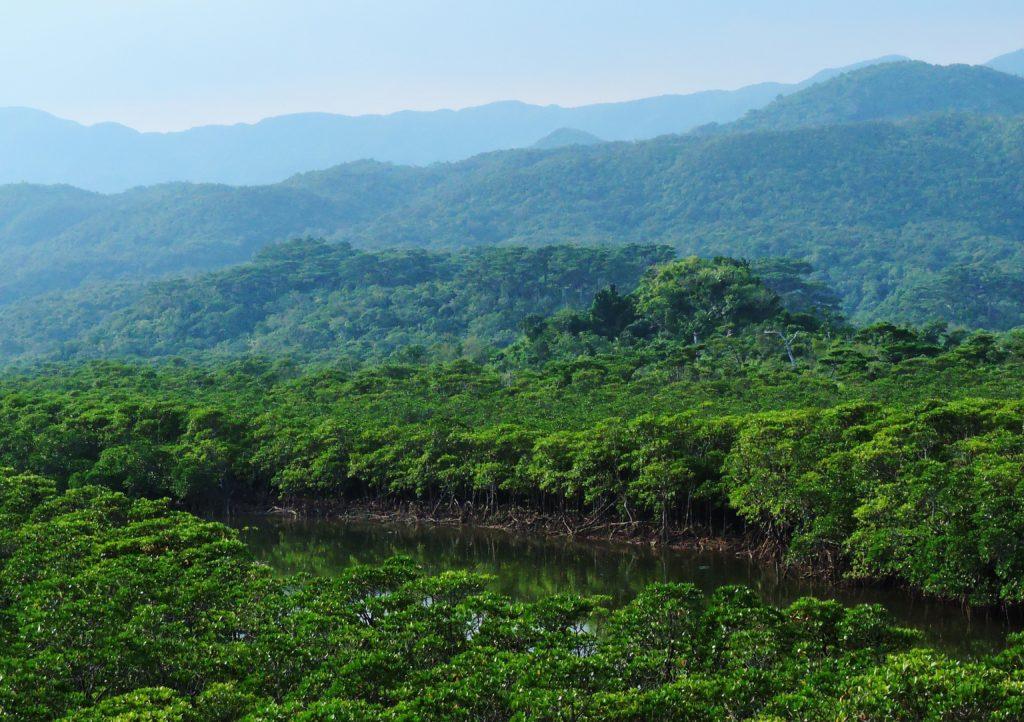 沖縄県 西表島 後良川