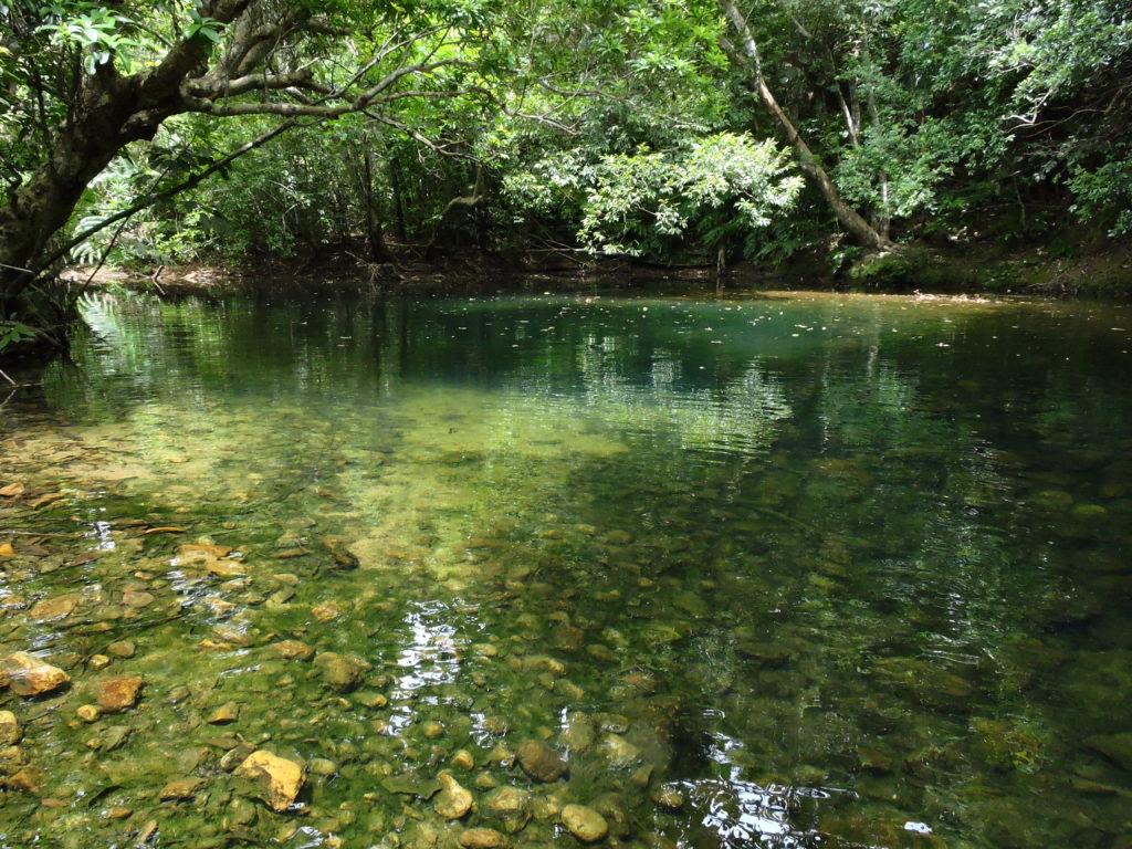 沖縄県 西表島 ホーラ川