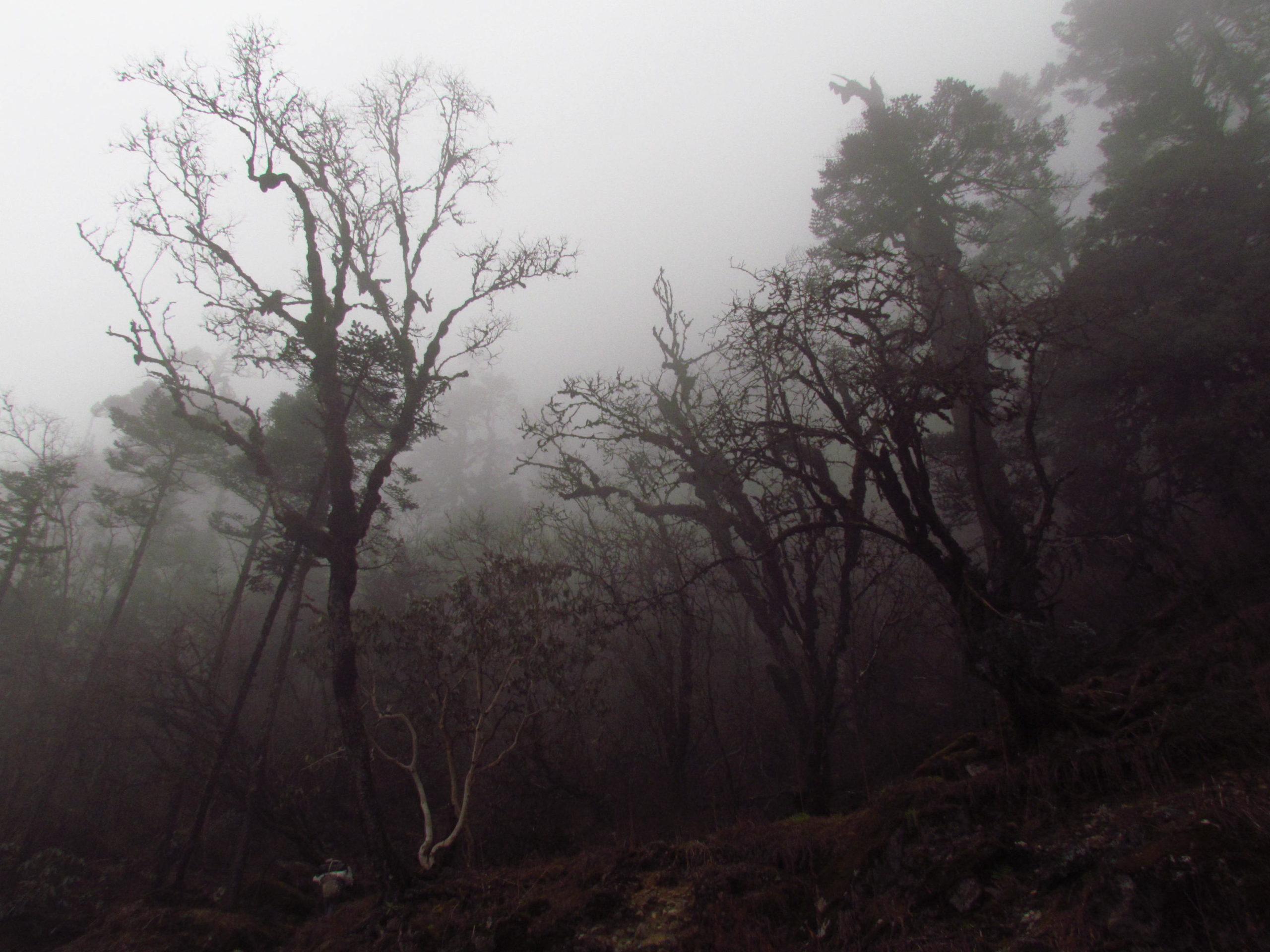 ネパール メラ・ピーク 雲霧林