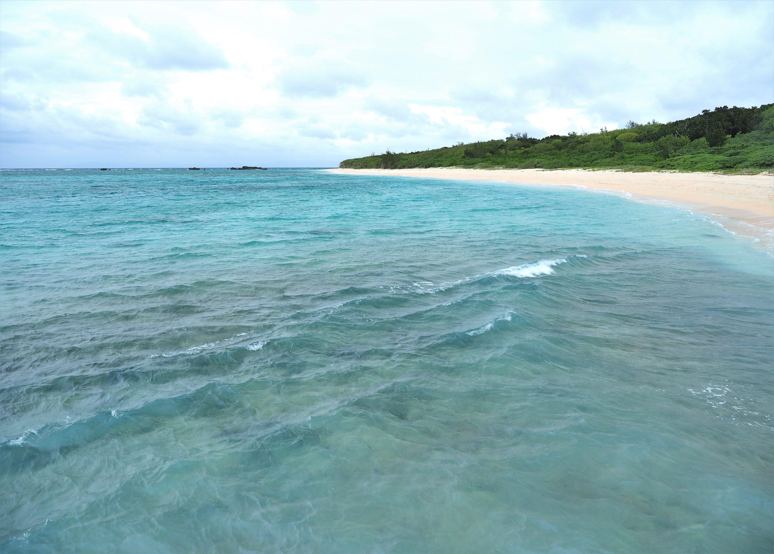 沖縄県 波照間島 浜シタン群落