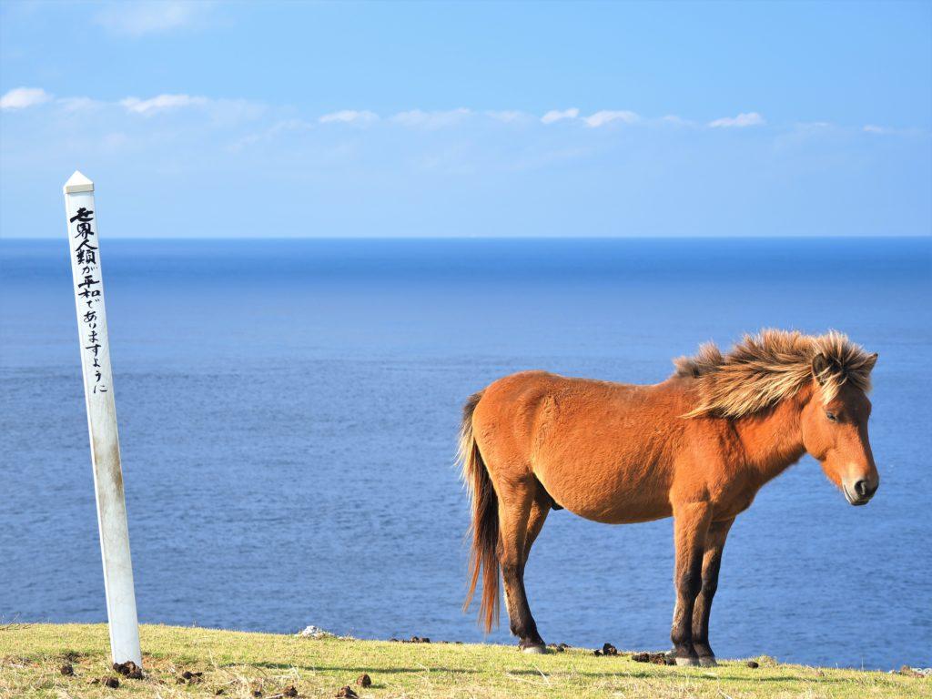 沖縄県 与那国島 馬鼻崎 与那国馬