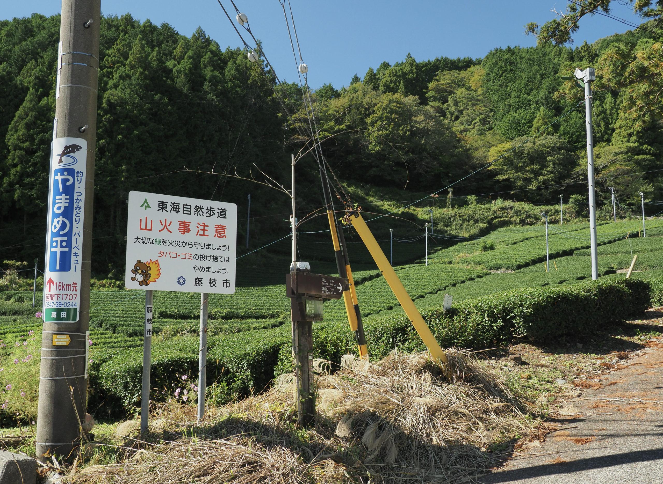 静岡県 鼻崎の大スギ