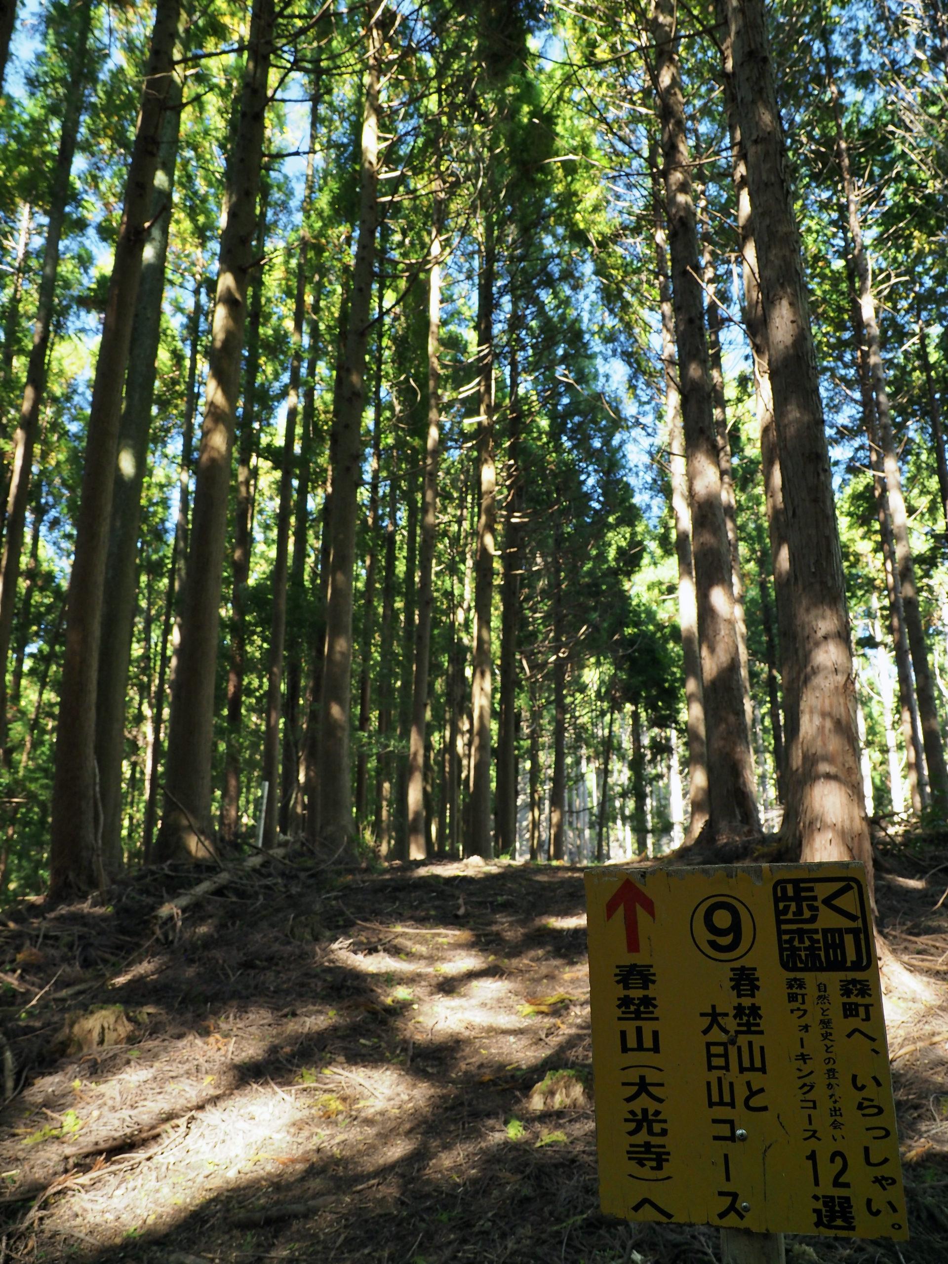 静岡県 春埜山