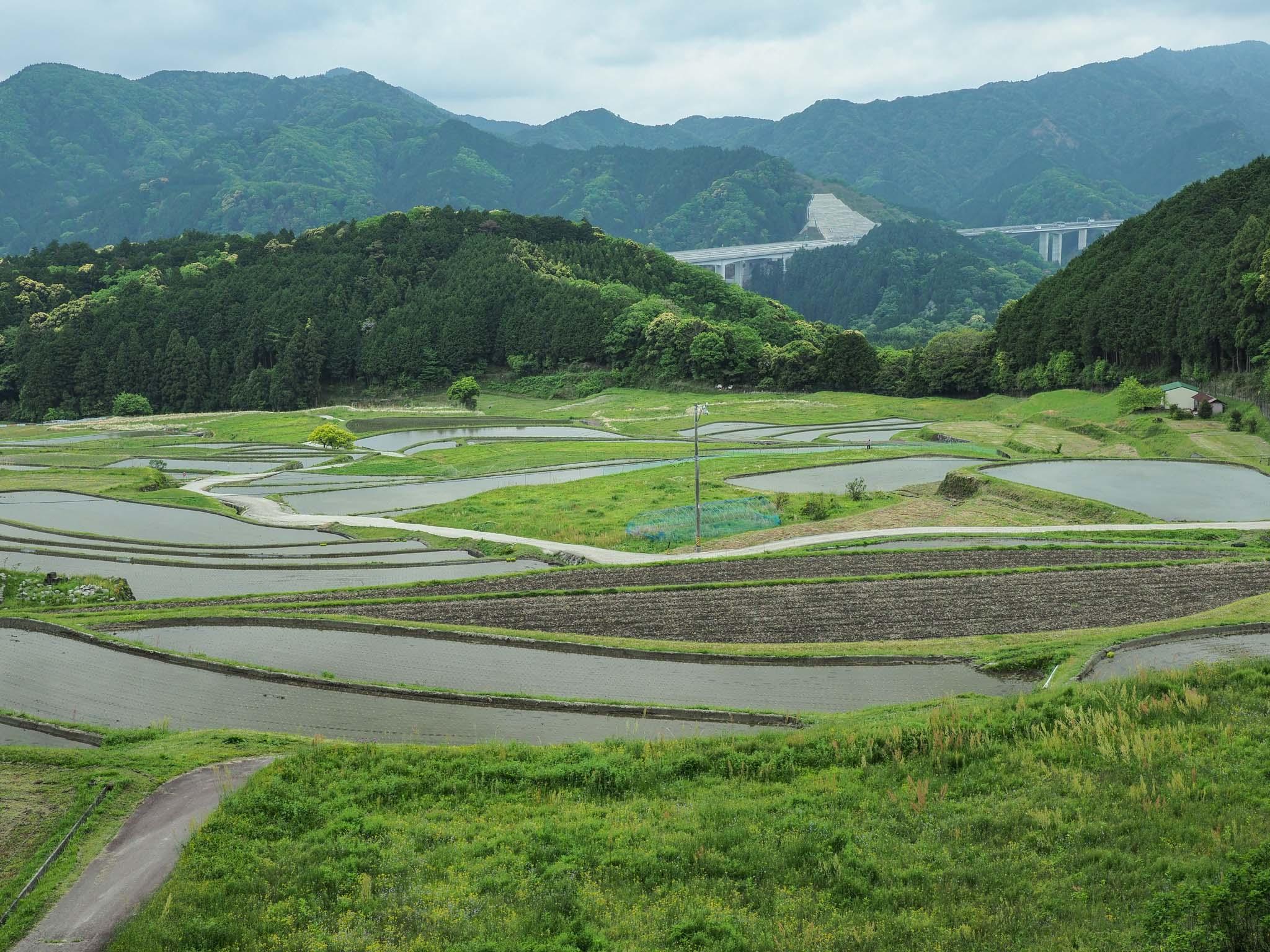 三重県 坂本棚田